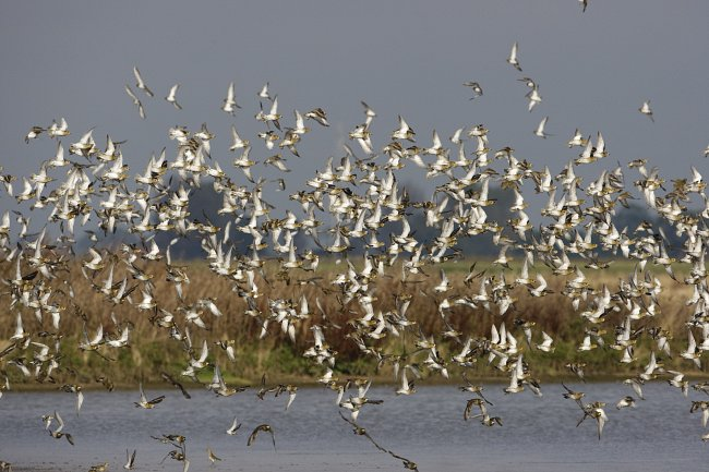 Humber Winter Bird Disturbance Survey 2014