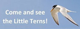 Little Tern open day - Sunday 8th July